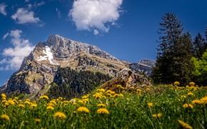 Picture summer, mountains, Switzerland, dandelions, Toggenburg, Altmann