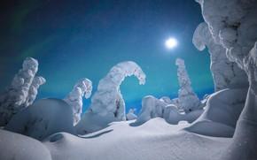 Picture winter, snow, Finland, Lapland