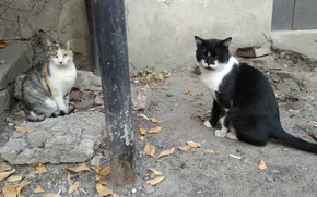 Picture cat, cat, street, cats, sitting, together