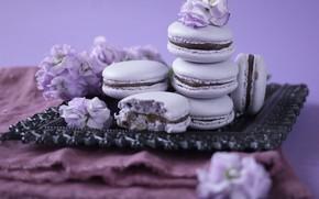 Picture cookies, lavender, tray, macaron, almond, cream