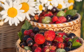 Picture strawberries, gooseberry, berries, raspberry, chamomile, summer, black currant