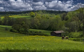Picture greens, field, forest, summer, nature, hills, field, horses, horse, grazing