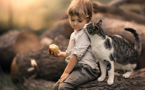 Picture cat, cat, Apple, boy, friendship, log, friends, bokeh