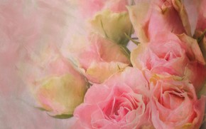 Picture roses, bouquet, pink, strokes