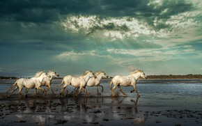 Picture the sky, rays, river, horses, horse