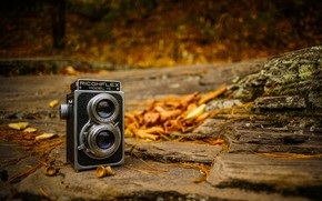 Picture autumn, leaves, camera