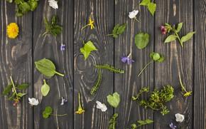 Wallpaper flowers, wood, flowers, leaves, decor, table