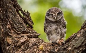 Picture tree, owl, bird, bark, chick, owlet, winks