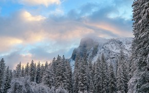 Picture winter, forest, snow, mountains, nature, fog