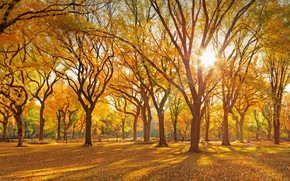 Picture autumn, New York, USA, Central Park