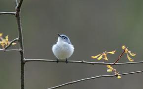 Picture tree, bird, branch