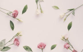 Picture flowers, background, pink, pink, white, buds, eustoma