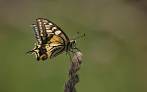 Picture macro, butterfly, butterfly