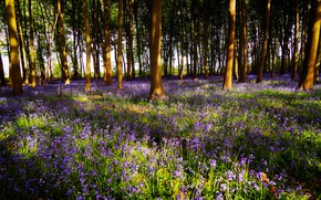 Picture forest, light, trees, flowers, branches, glade, spring, shadows, bells, lilac