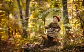 Picture forest, sheet, stump, girl, dwarf, hedgehog