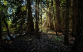 Picture forest, stream, Germany, sunlight