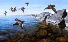Picture the sky, flight, birds, nature, stones, shore, figure, duck, the bottom, pack, picture, art, painting, …