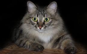 Picture cat, background, cat