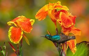 Picture flowers, nature, tropics, bird