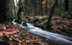 Picture forest, river, mushroom
