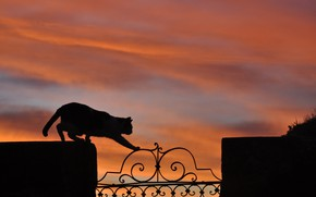 Picture cat, sunset, fence, silhouette