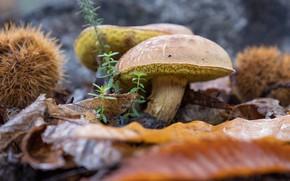 Picture autumn, leaves, mushrooms, bokeh
