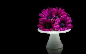 Picture flowers, bouquet, purple, black background, stand, lilac, composition, osteospermum