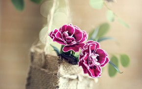 Picture leaves, flowers, branch, basket, bokeh, clove