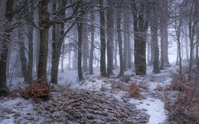 Picture winter, frost, forest, snow, trees, branches, fog, trunks, haze, snowfall, the bushes, late autumn