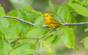 Picture leaves, bird, yellow