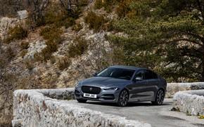 Picture vegetation, Jaguar, slope, 2020, gray-silver, Jaguar XE