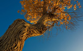 Picture autumn, the sky, tree, trunk