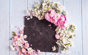 Picture flowers, spring, pink, white, wood, pink, blossom, flowers, spring
