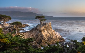 Picture trees, landscape, nature, the ocean, rocks, USA, cypress