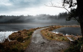 Picture fog, lake, bench
