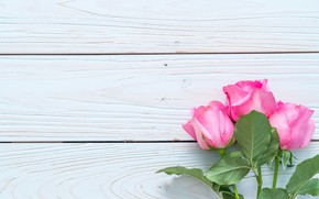 Picture flowers, roses, pink, fresh, wood, pink, flowers, roses
