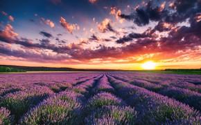 Wallpaper field, summer, clouds, landscape, sunset, nature, grass, lavender, Valentin Valkov