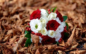 Picture roses, bouquet, dry leaves