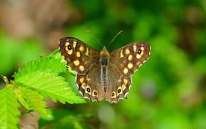 Wallpaper Macro, Spring, Butterfly, Macro, Butterfly