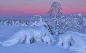 Picture winter, snow, trees, landscape, nature, morning, the snow, The Kola Peninsula, Kandalaksha