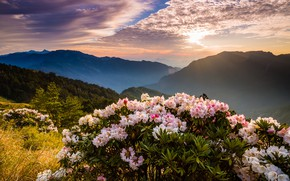 Picture forest, the sky, the sun, clouds, light, trees, landscape, flowers, mountains, nature, fog, dawn, hills, …