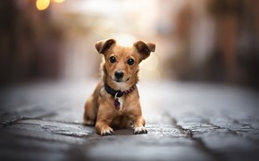 Picture each, street, dog