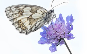Picture flower, butterfly, light background