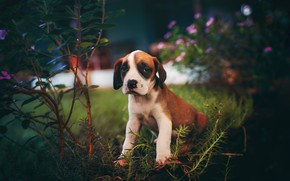 Picture look, flowers, branches, the dark background, dog, garden, baby, muzzle, puppy, sitting, the bushes, bokeh