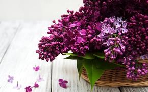 Picture flowers, basket, bouquet, lilac, lilac, Olena Rudo