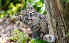 Picture nature, kitty, tree, bokeh
