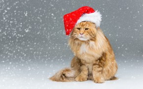 Picture winter, cat, cat, look, snow, red, Christmas, New year, grey background, sitting, snowfall, Maine Coon, …