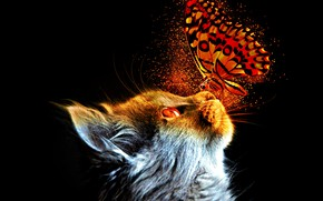 Picture fantasy, cat, butterfly, animal, pet