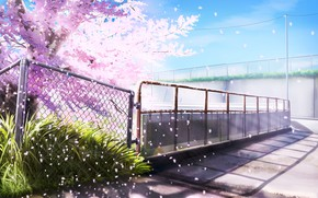 Picture Spring, Mesh, The fence, Flowering tree