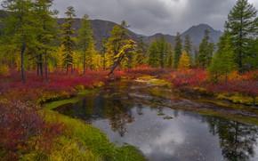 Picture autumn, grass, trees, landscape, mountains, clouds, nature, Bank, shrubs, Vladimir Ryabkov, Kolyma, lake